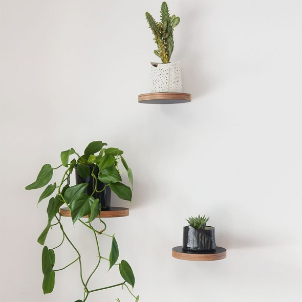 Round Floating Shelves in group