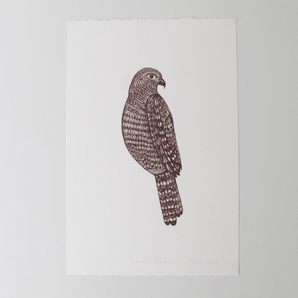 Brown Falcon Art Print