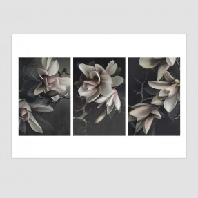 Magnolias Set of 3 Unframed