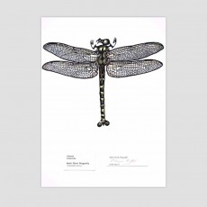 Taniwha Dragonfly Art Print